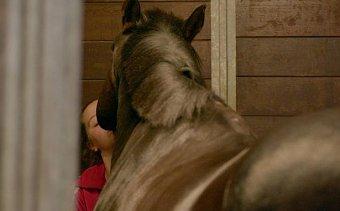 paard en meisje